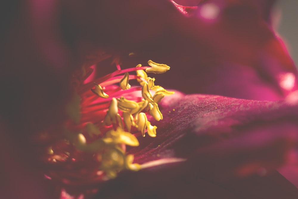 yellow and red flower in macro photography