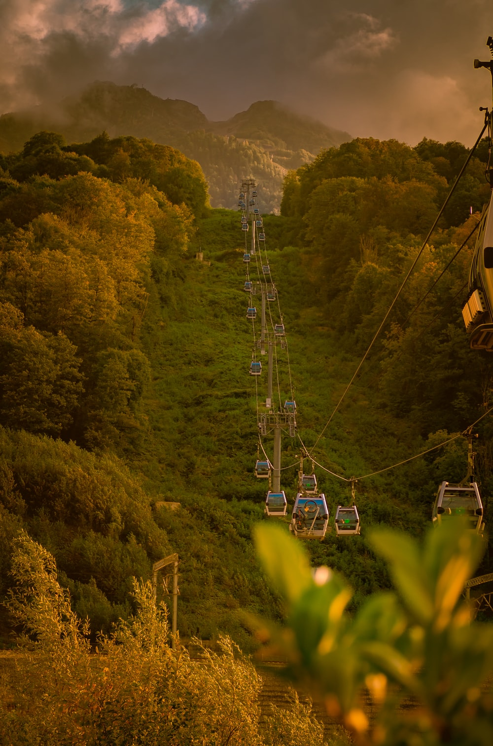 cable cars over green trees during daytime