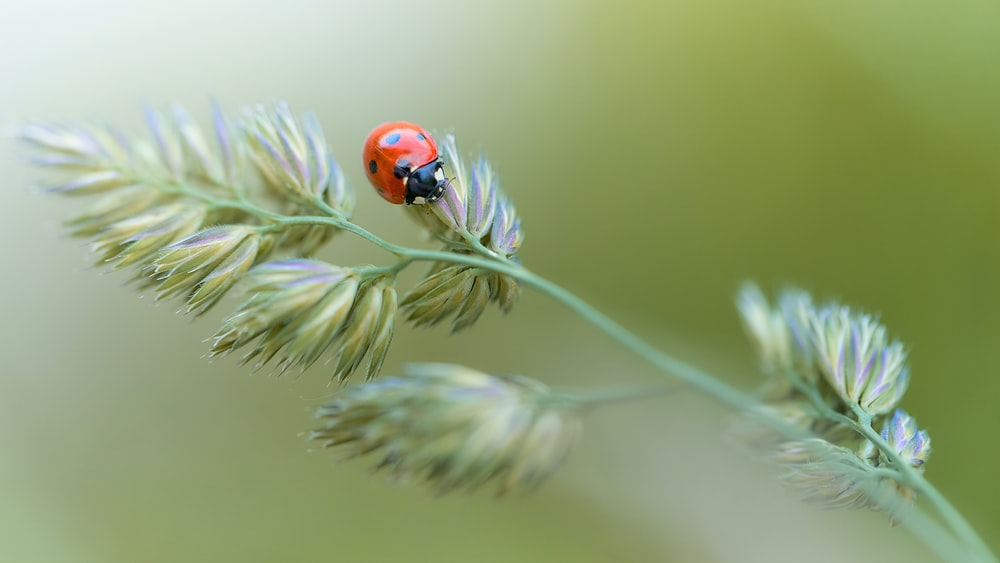 red ladybug perched on green plant in close up photography during daytime
