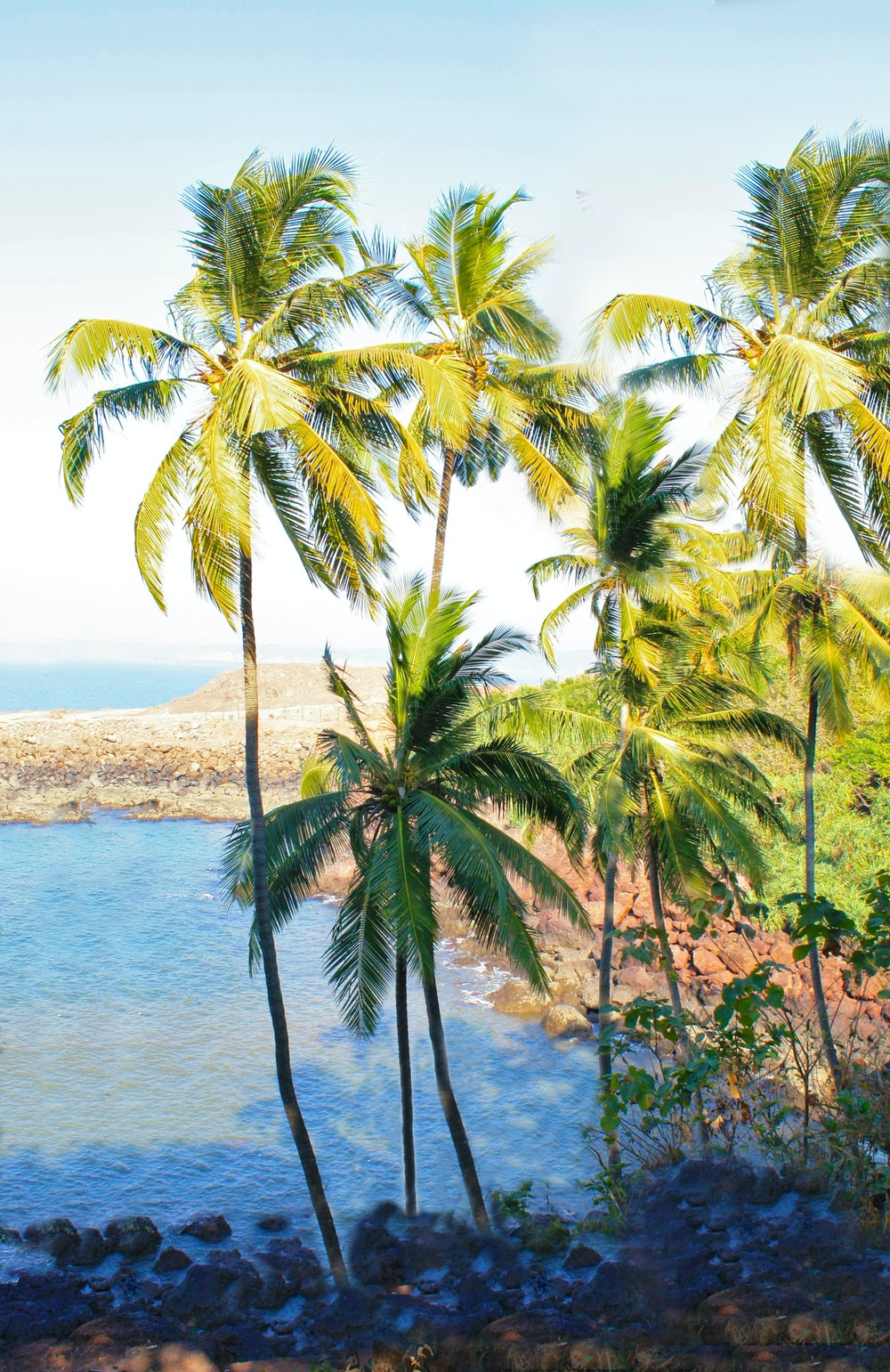 green coconut palm tree near body of water during daytime