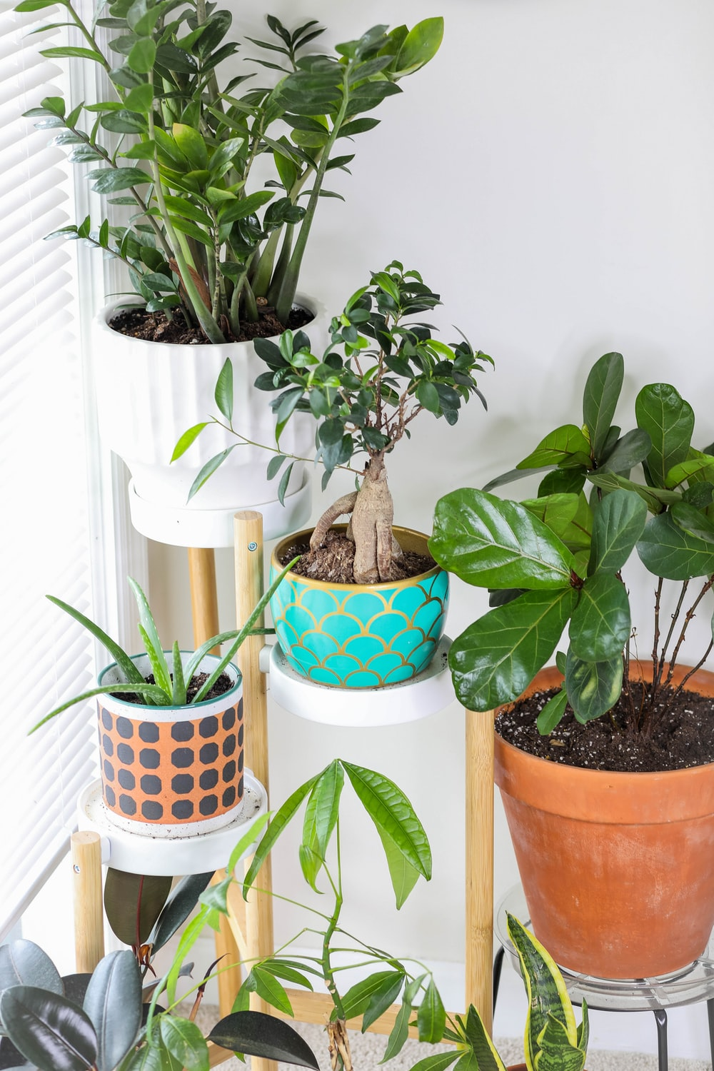 green plant on white and blue ceramic pot