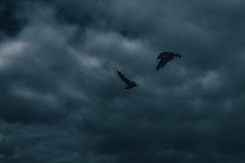 black bird flying under cloudy sky during daytime