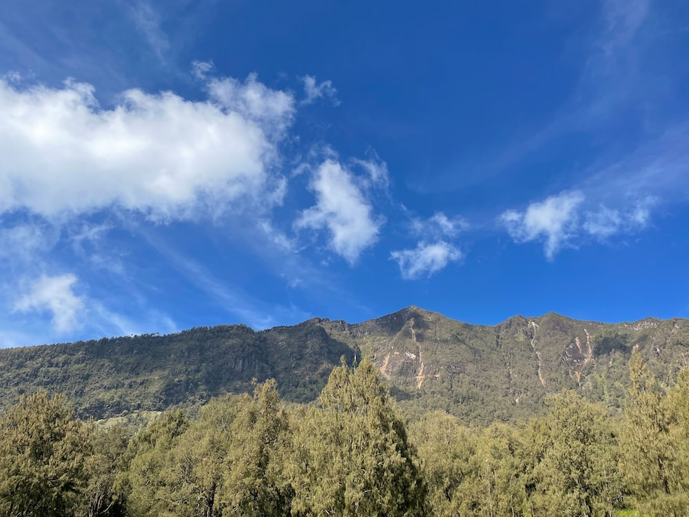 green trees and mountain under blue sky during daytime