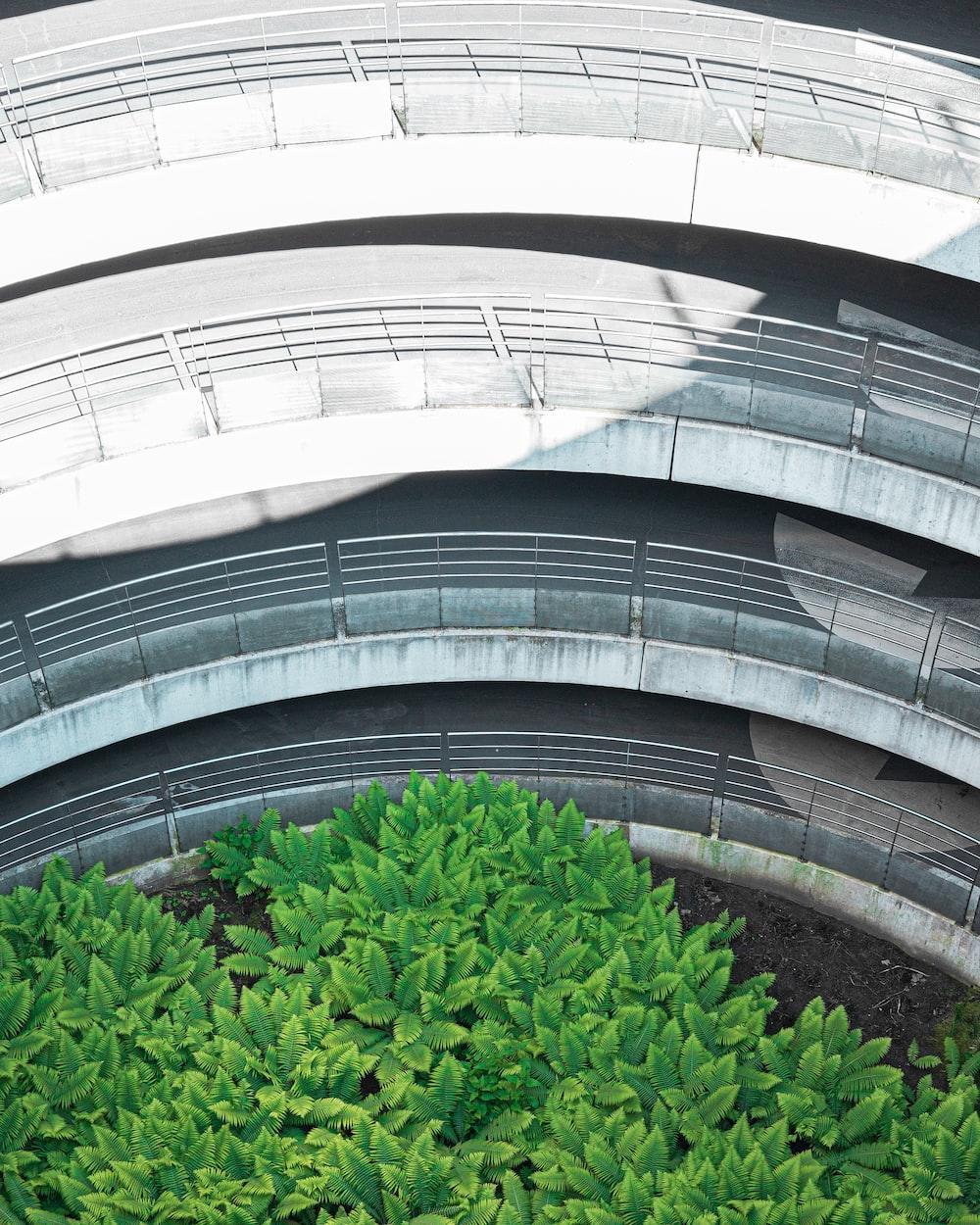 green plant on white concrete building