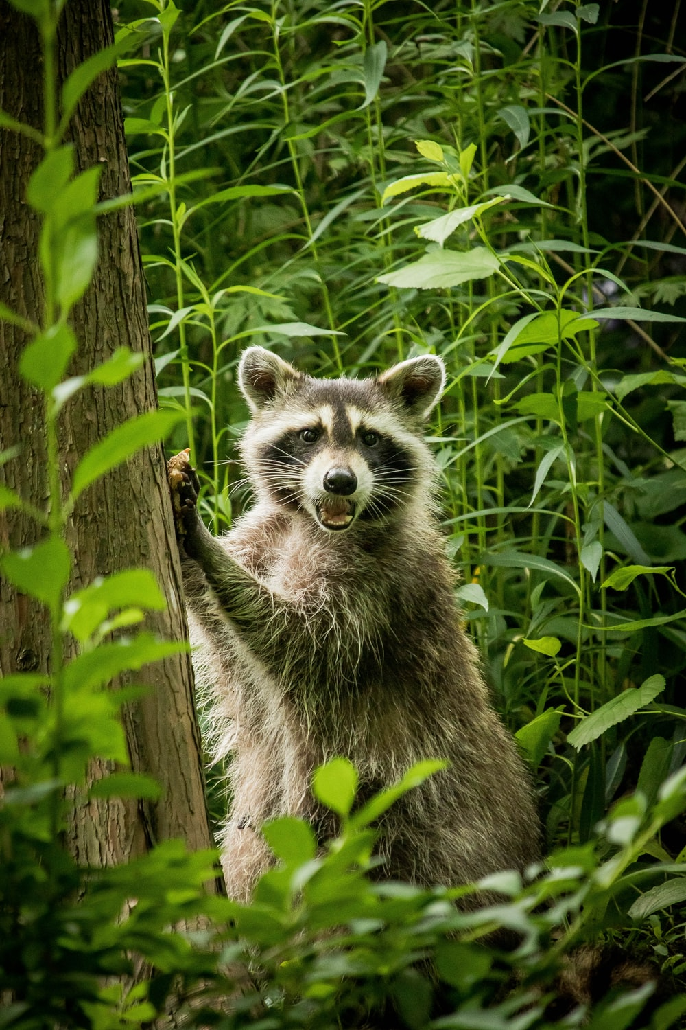 brown and white raccoon on brown tree