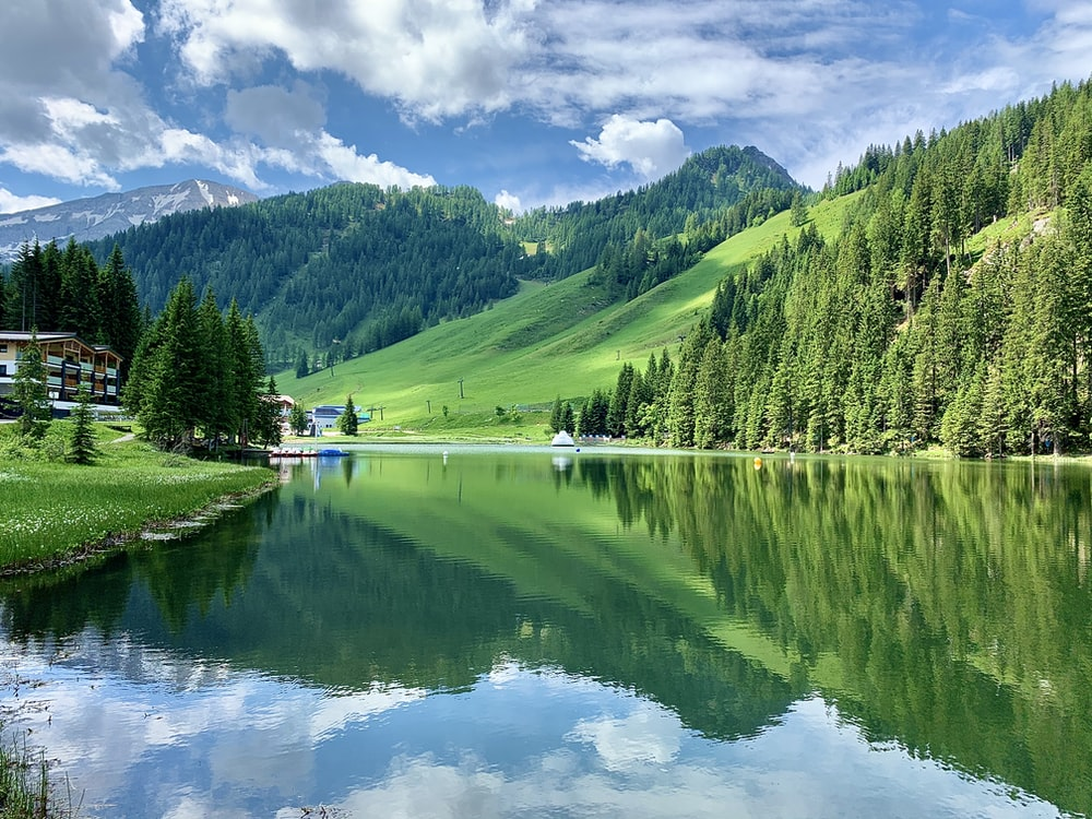 green trees near lake under blue sky during daytime