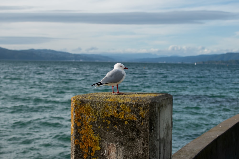 white and black bird on brown wooden post near sea during daytime
