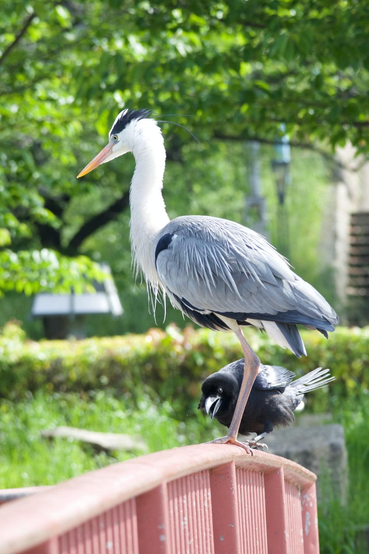 white stork on brown wooden stick during daytime
