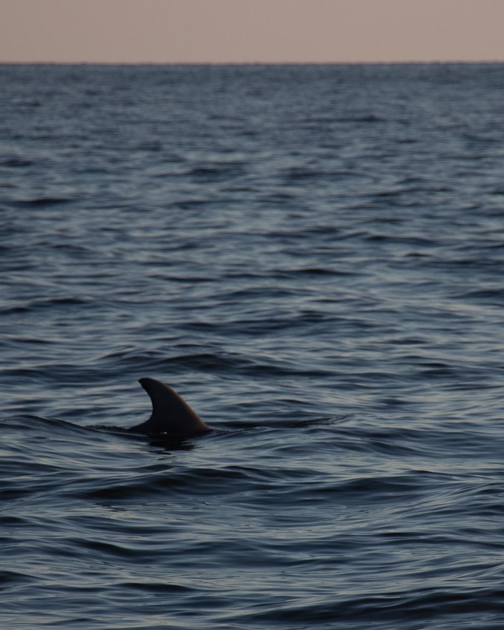 black whale in the sea during daytime