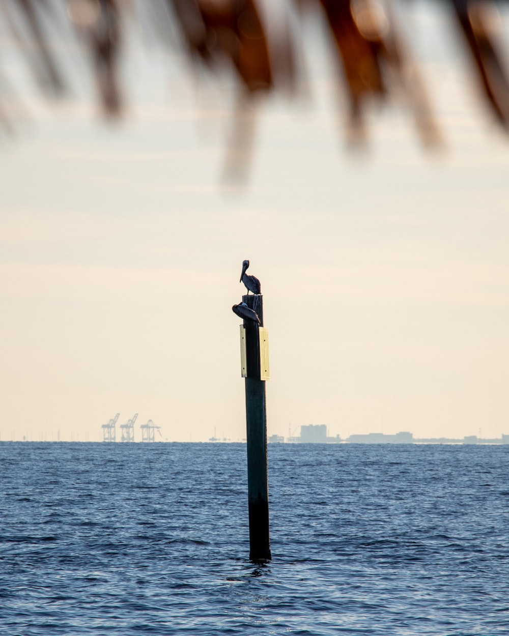person standing on black post near body of water during daytime