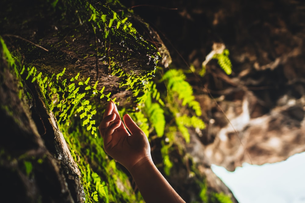 person holding green moss on tree