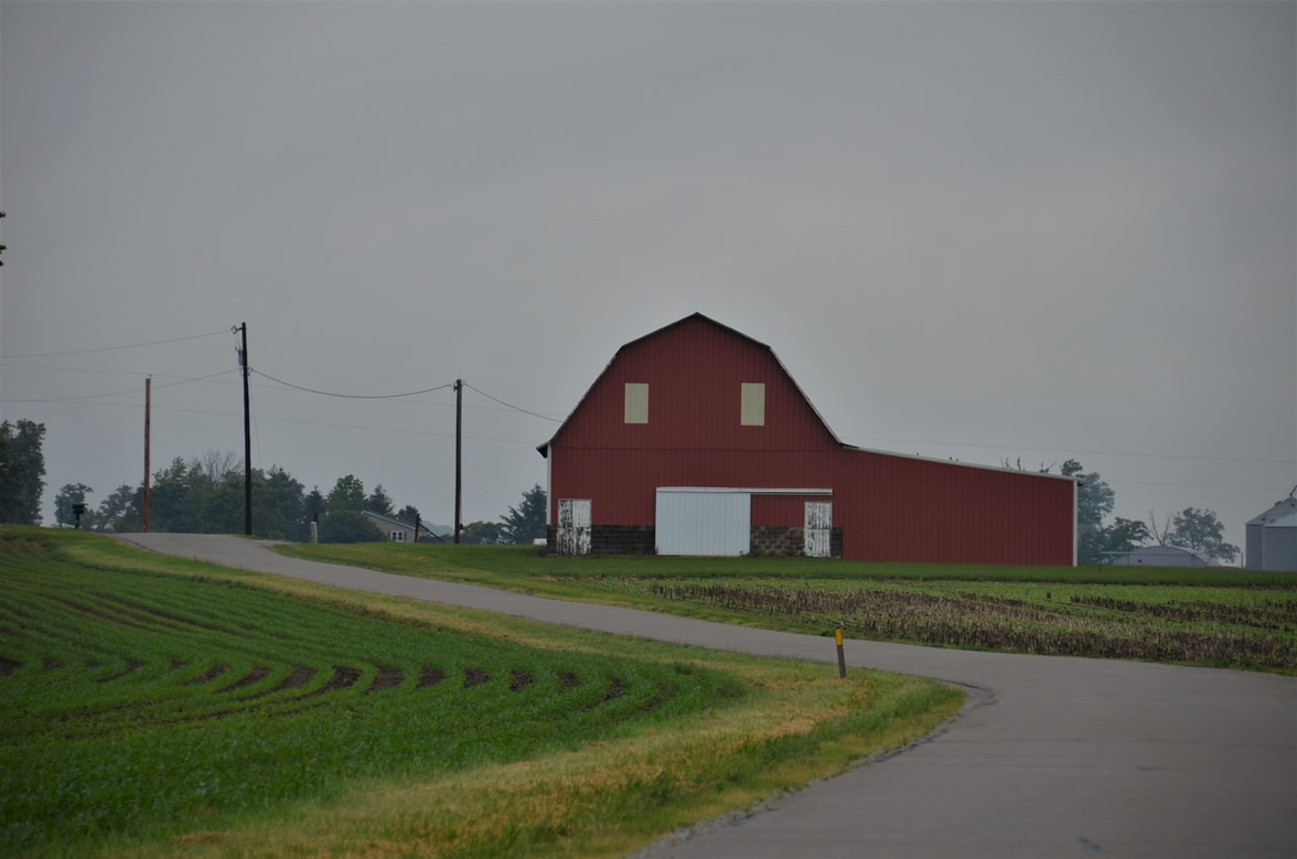 Red and white barn beside the road and new growth cornfield