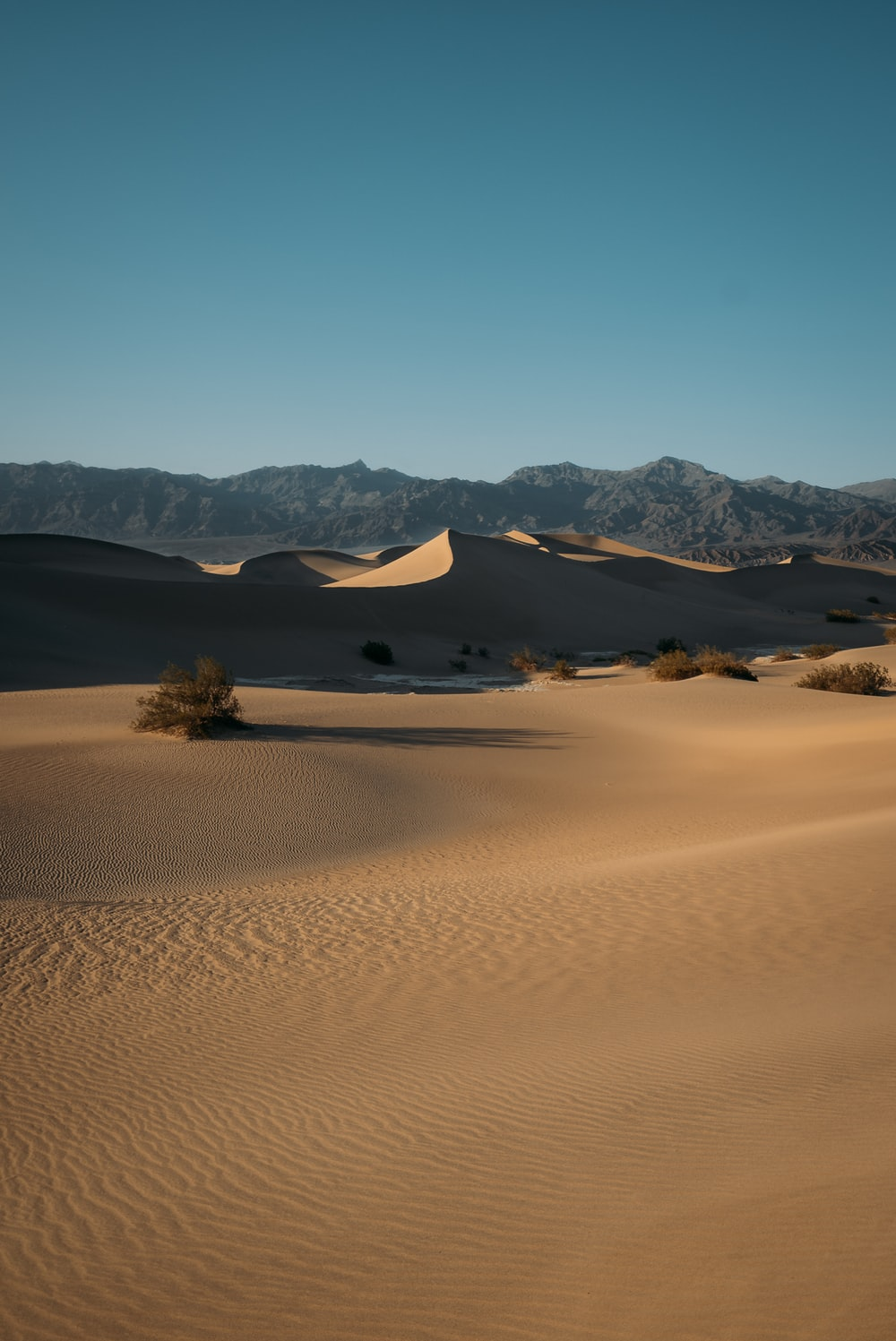 brown sand with green trees and mountains in the distance
