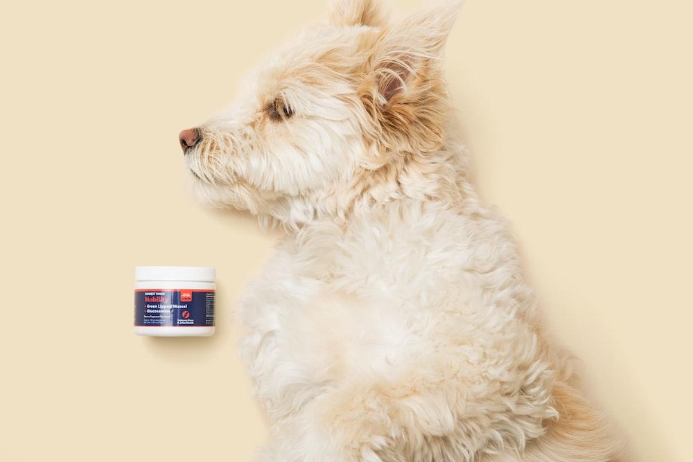 white long coated dog lying on white fur textile