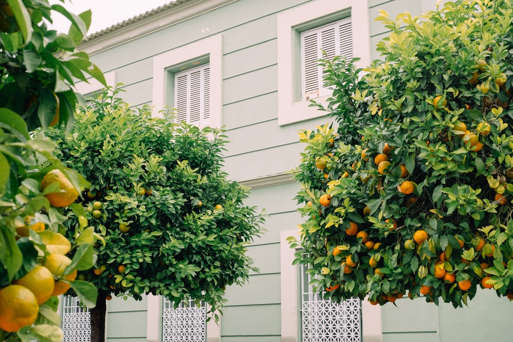 green and yellow round fruit on white concrete building during daytime