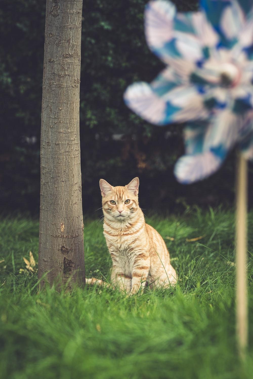 orange tabby cat on green grass field