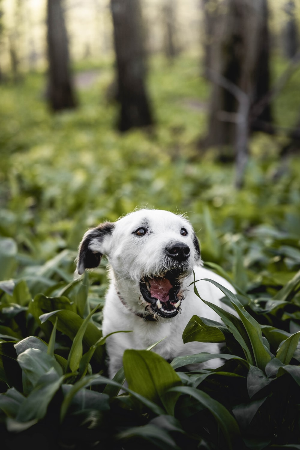 white and black short coated dog on green grass during daytime