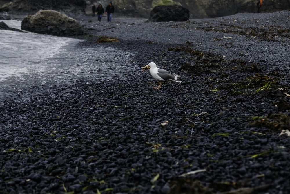 white and black bird on black and yellow stones near body of water during daytime