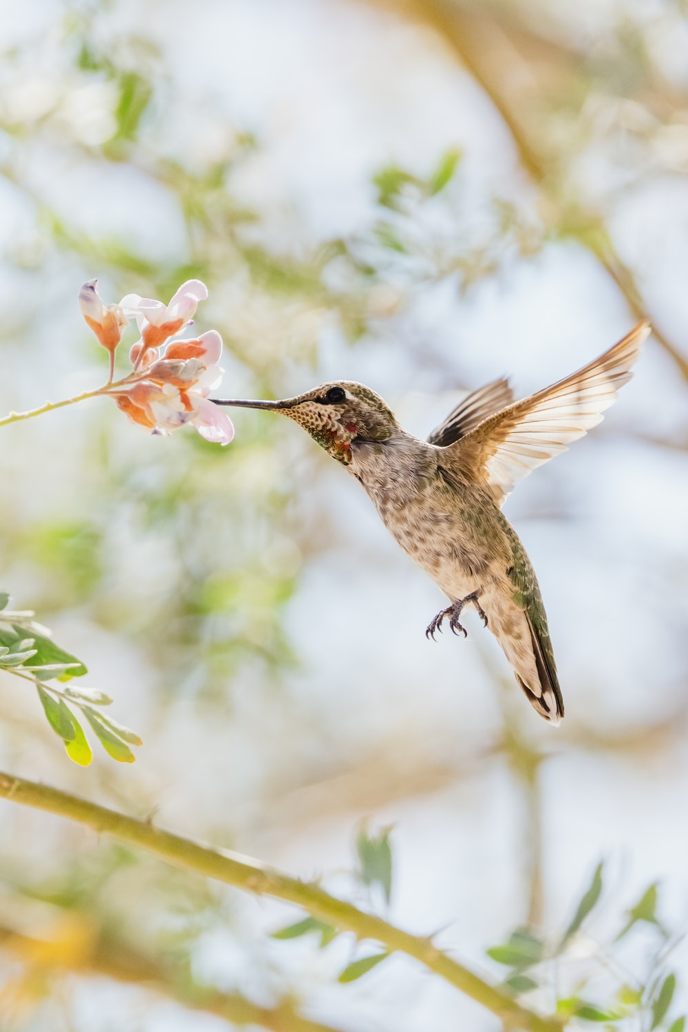 brown humming bird flying in the air