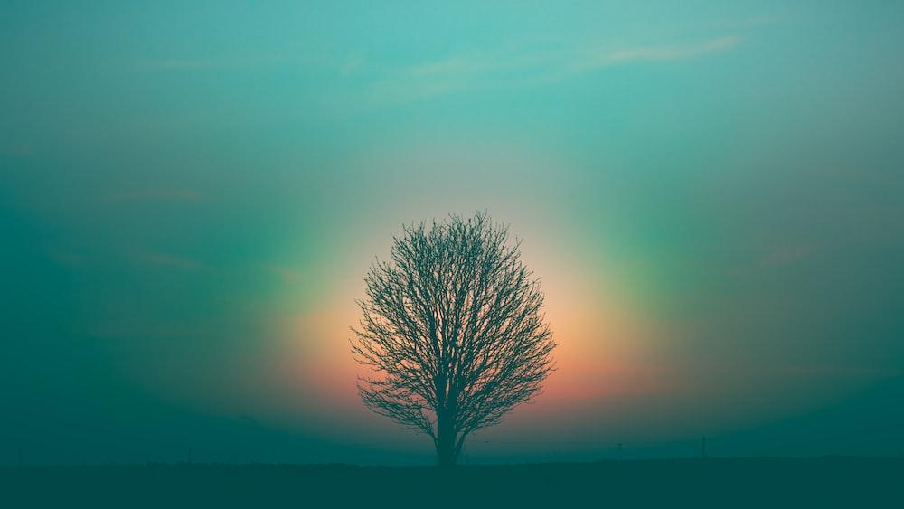 leafless tree under purple sky