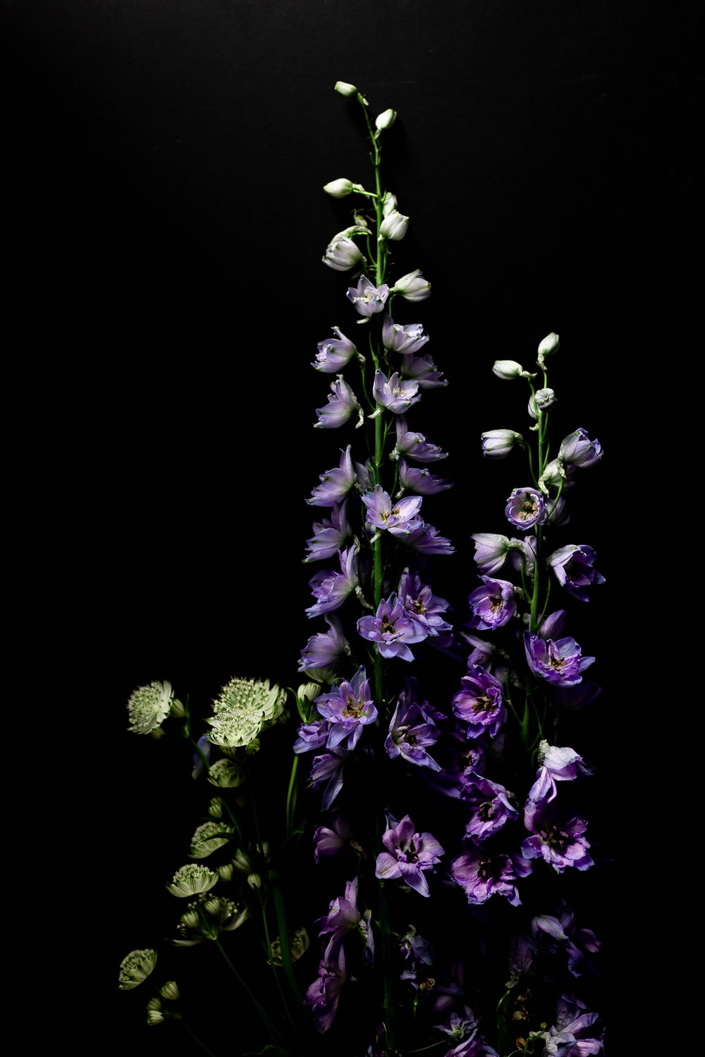 purple and white flowers with black background