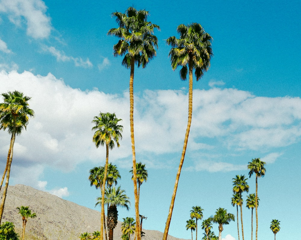 green palm tree on hill under blue sky during daytime