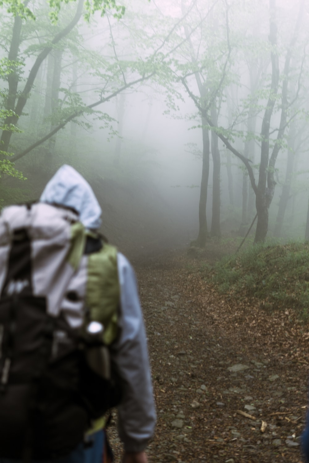 person in gray and black backpack walking on forest during foggy weather