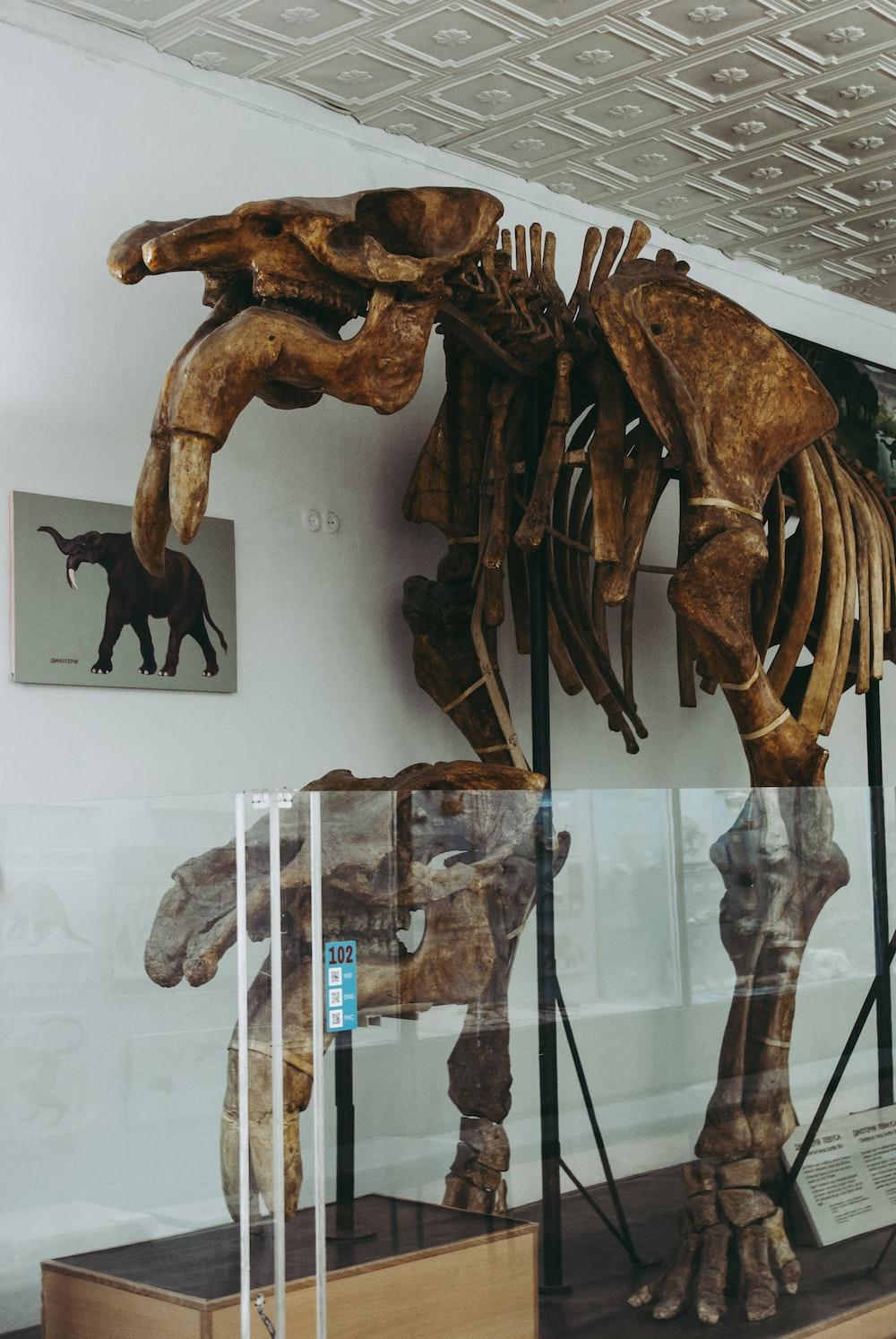 brown wooden animal figurine on glass shelf