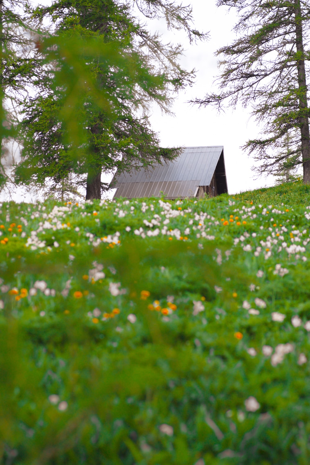 brown wooden house in the middle of green grass field