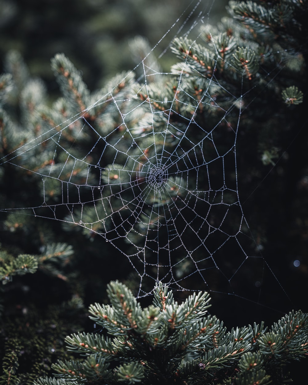 spider web on green plant