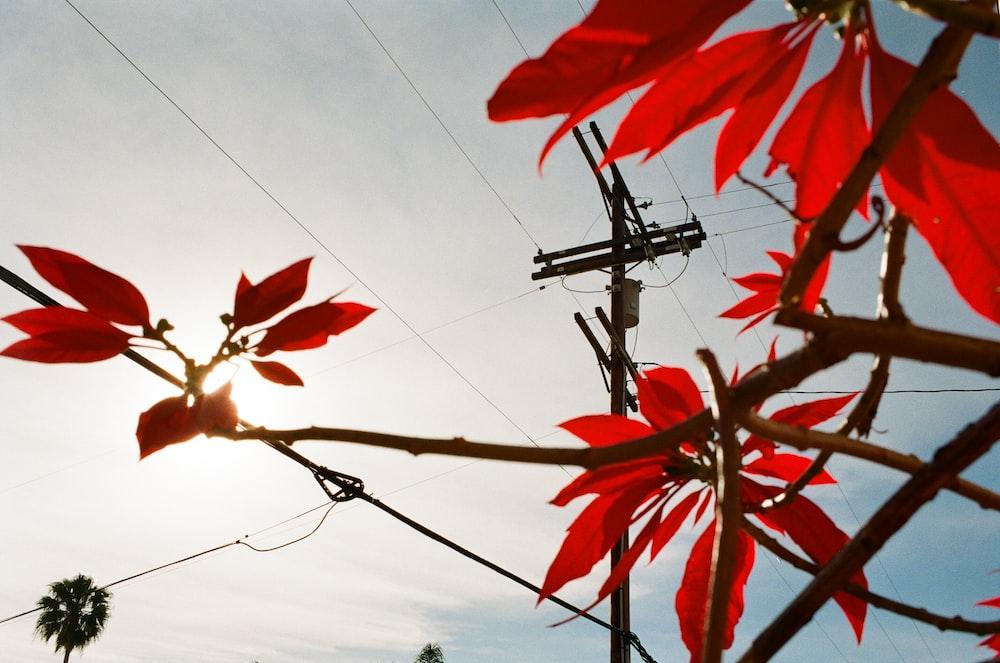 red leaves under blue sky during daytime