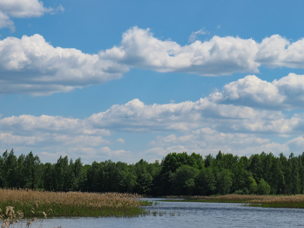green trees beside river under white clouds and blue sky during daytime