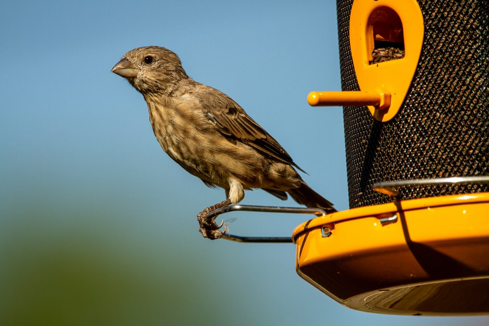brown bird on yellow and black bird feeder