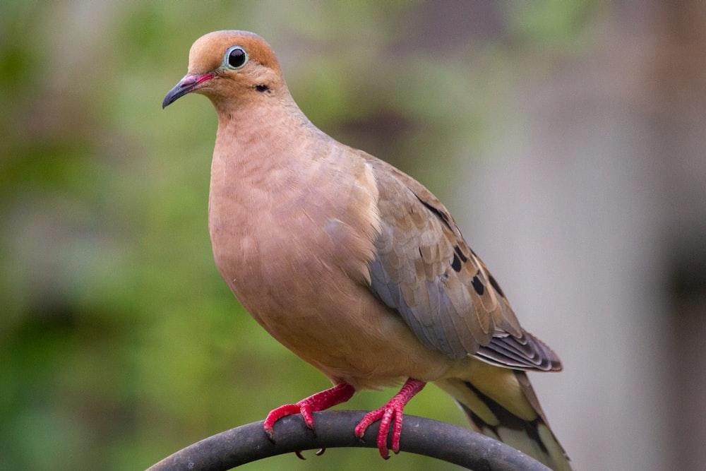 brown bird on black metal bar