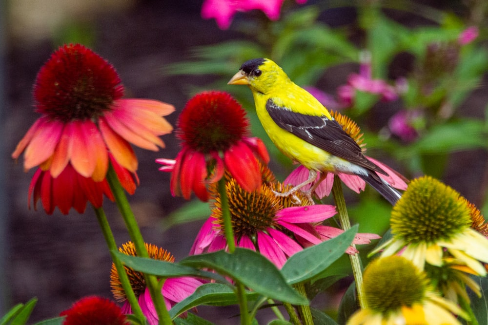yellow and black bird on red flower