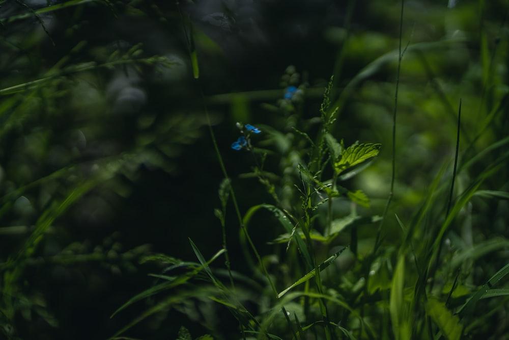 blue flower in green grass