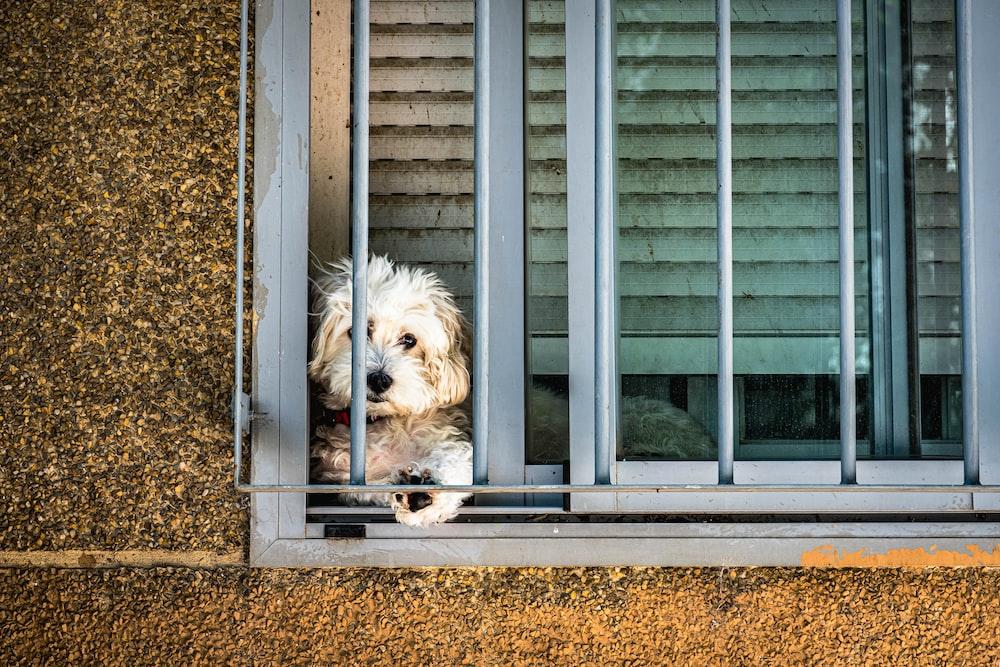 white long coated small dog sitting on window