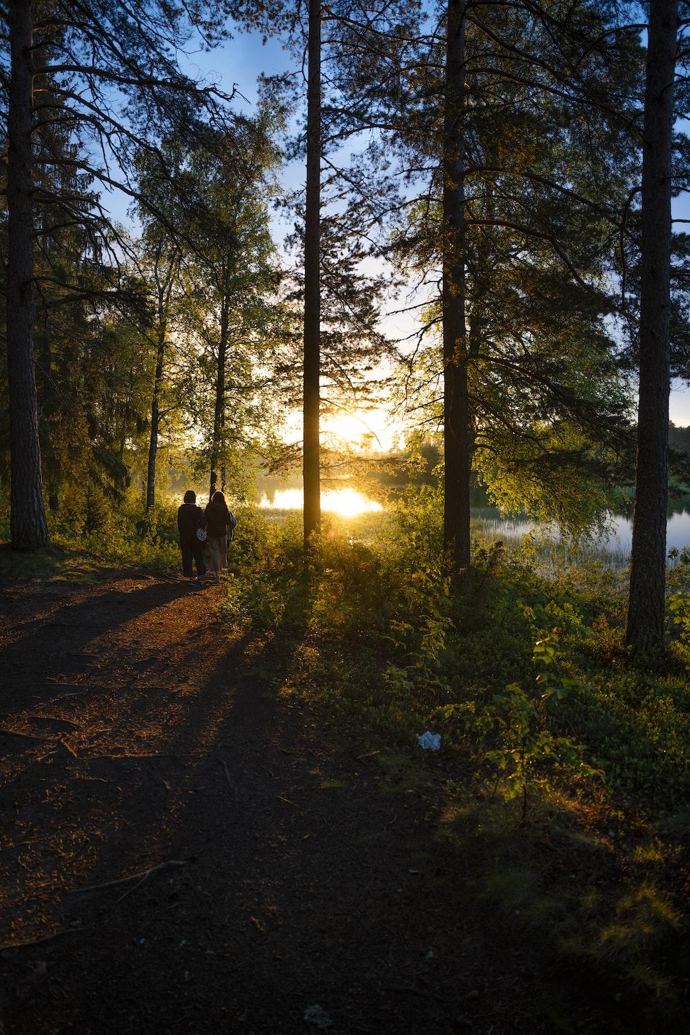 black dog on forest during daytime
