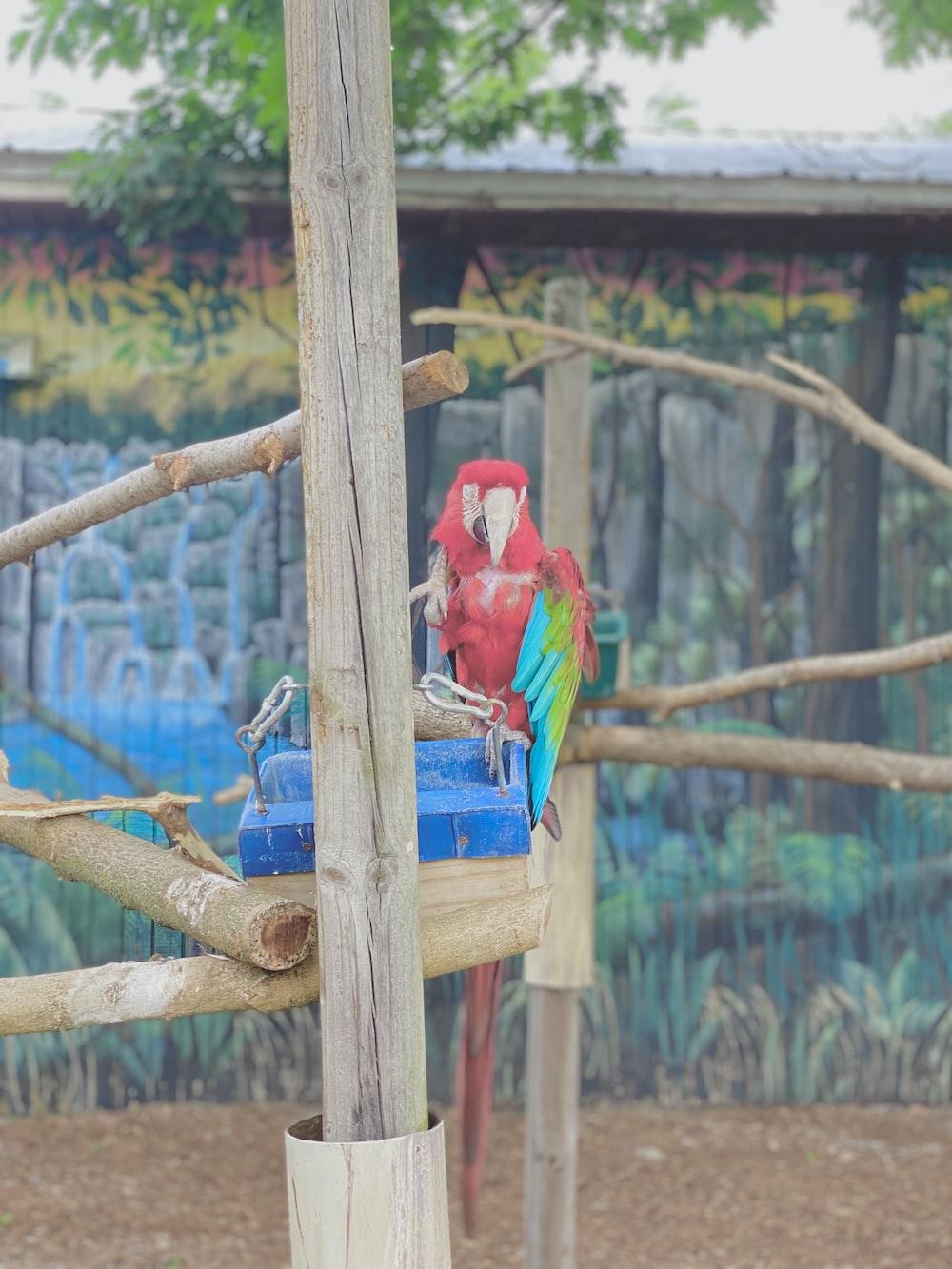 red bird on brown wooden stick