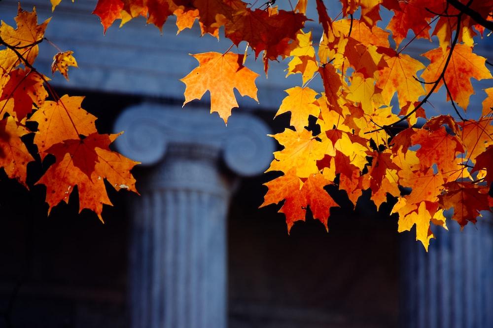 orange maple leaves on gray concrete post