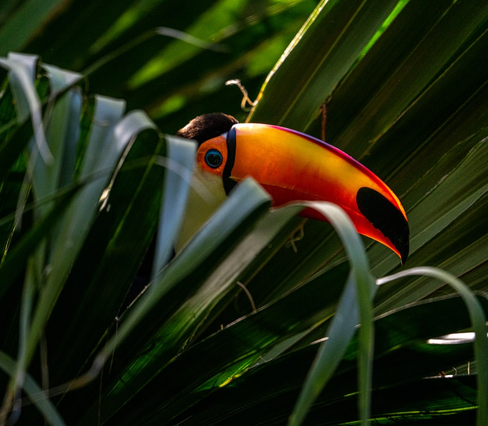 black yellow and red bird on green leaf plant