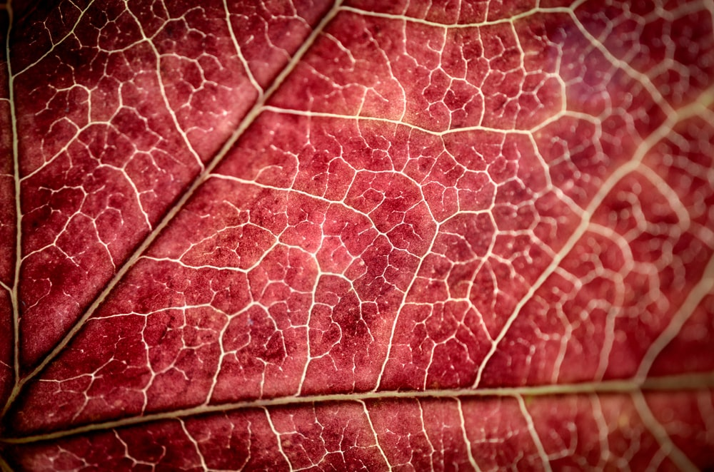 red and white leaf textile