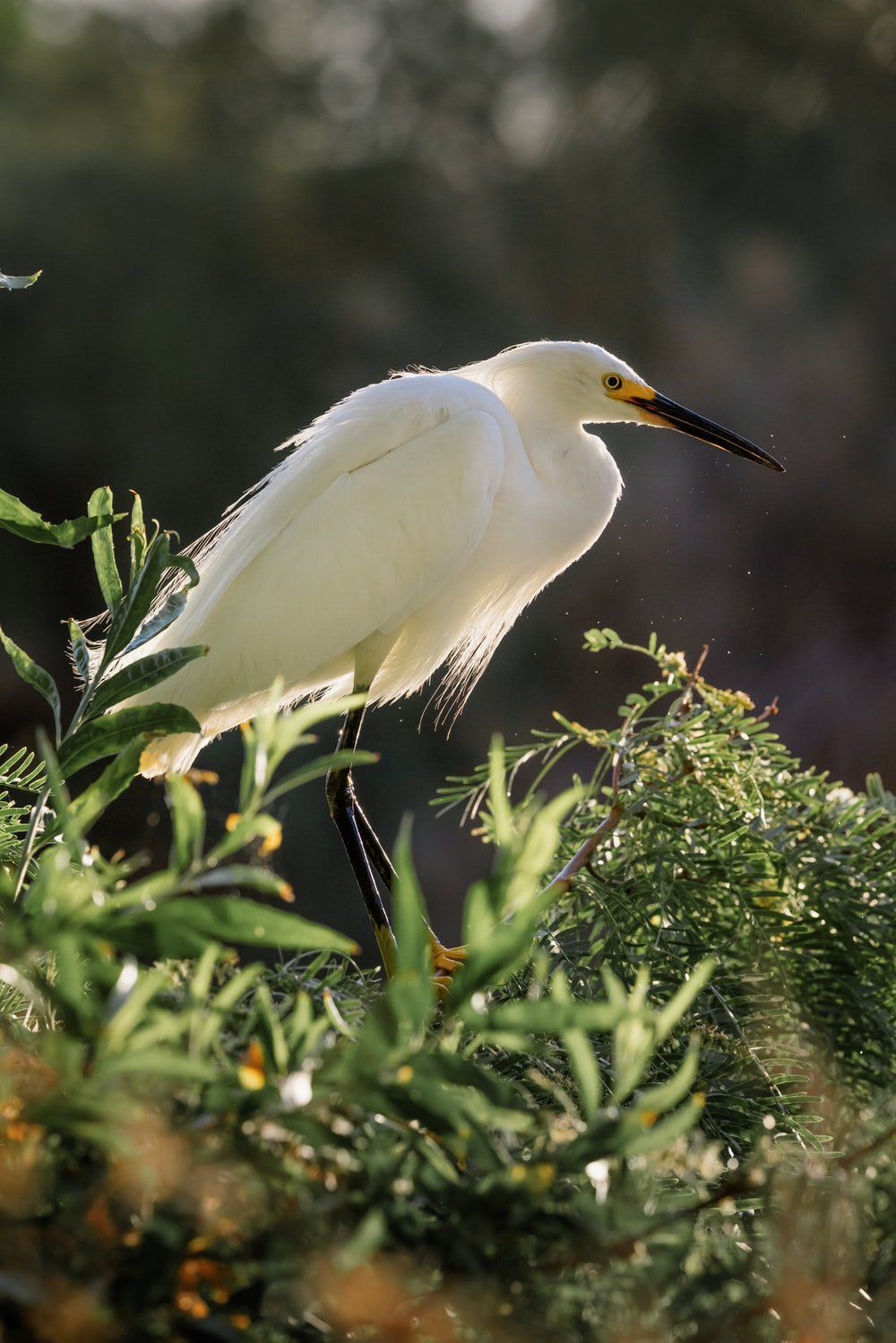 white egret perched on green plant during daytime