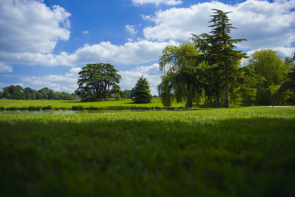 green grass field with green trees under blue sky and white clouds during daytime