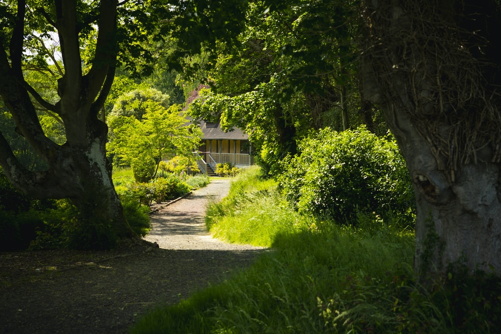 green trees near brown wooden house during daytime
