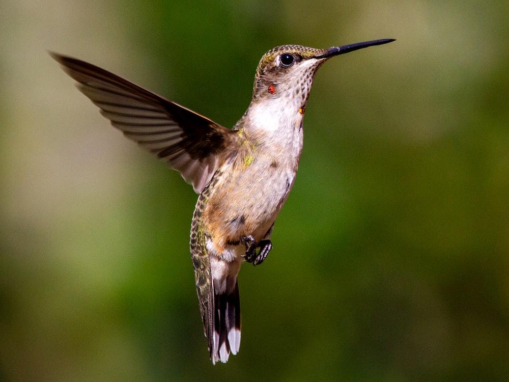 brown humming bird flying during daytime