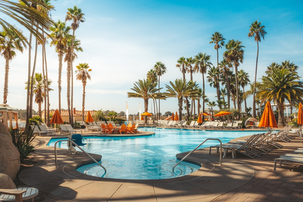 swimming pool near palm trees during daytime