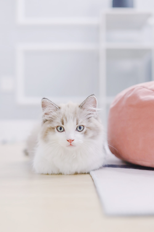 white and gray cat beside apple fruit