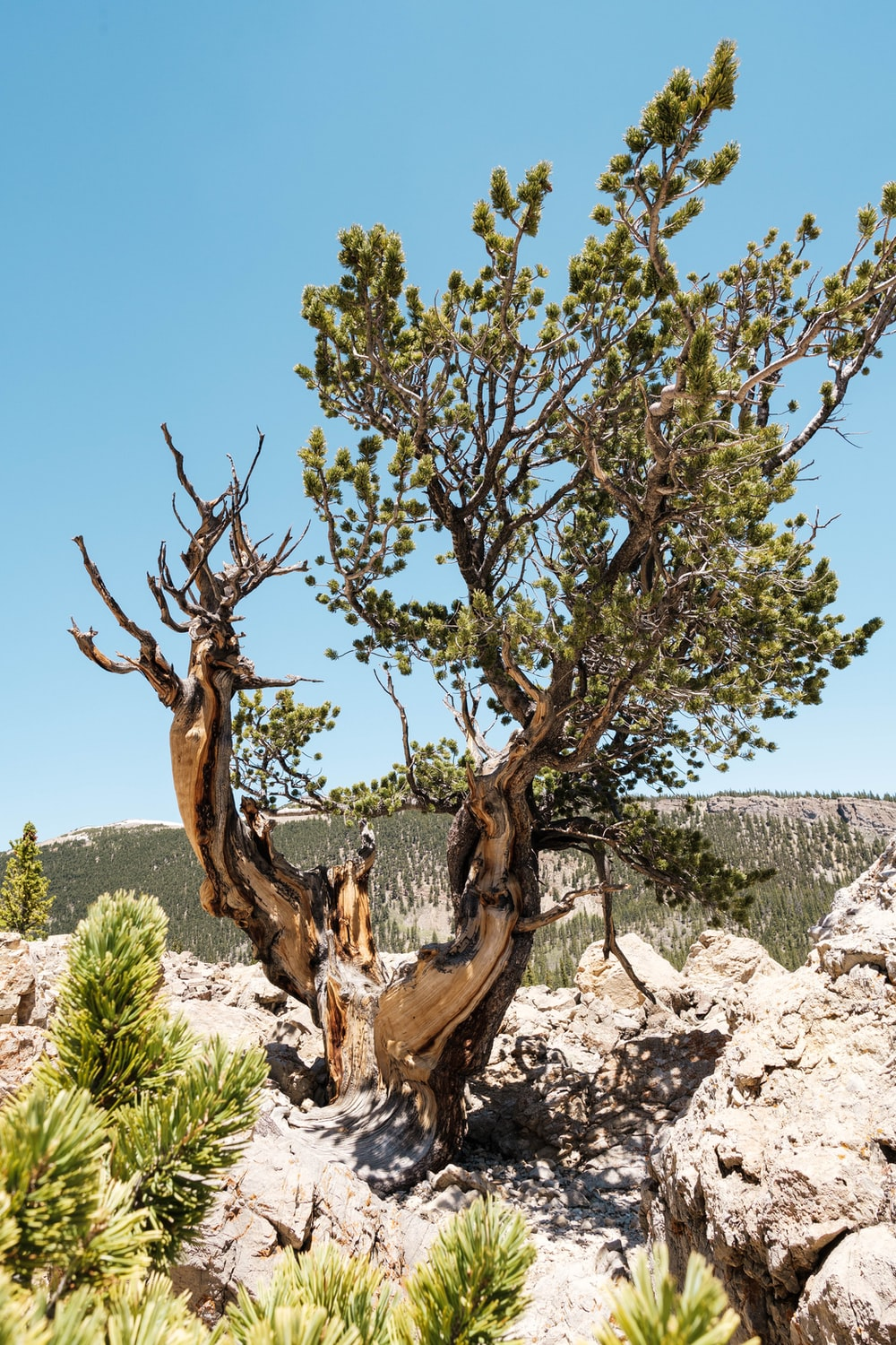 brown tree trunk on gray rock during daytime