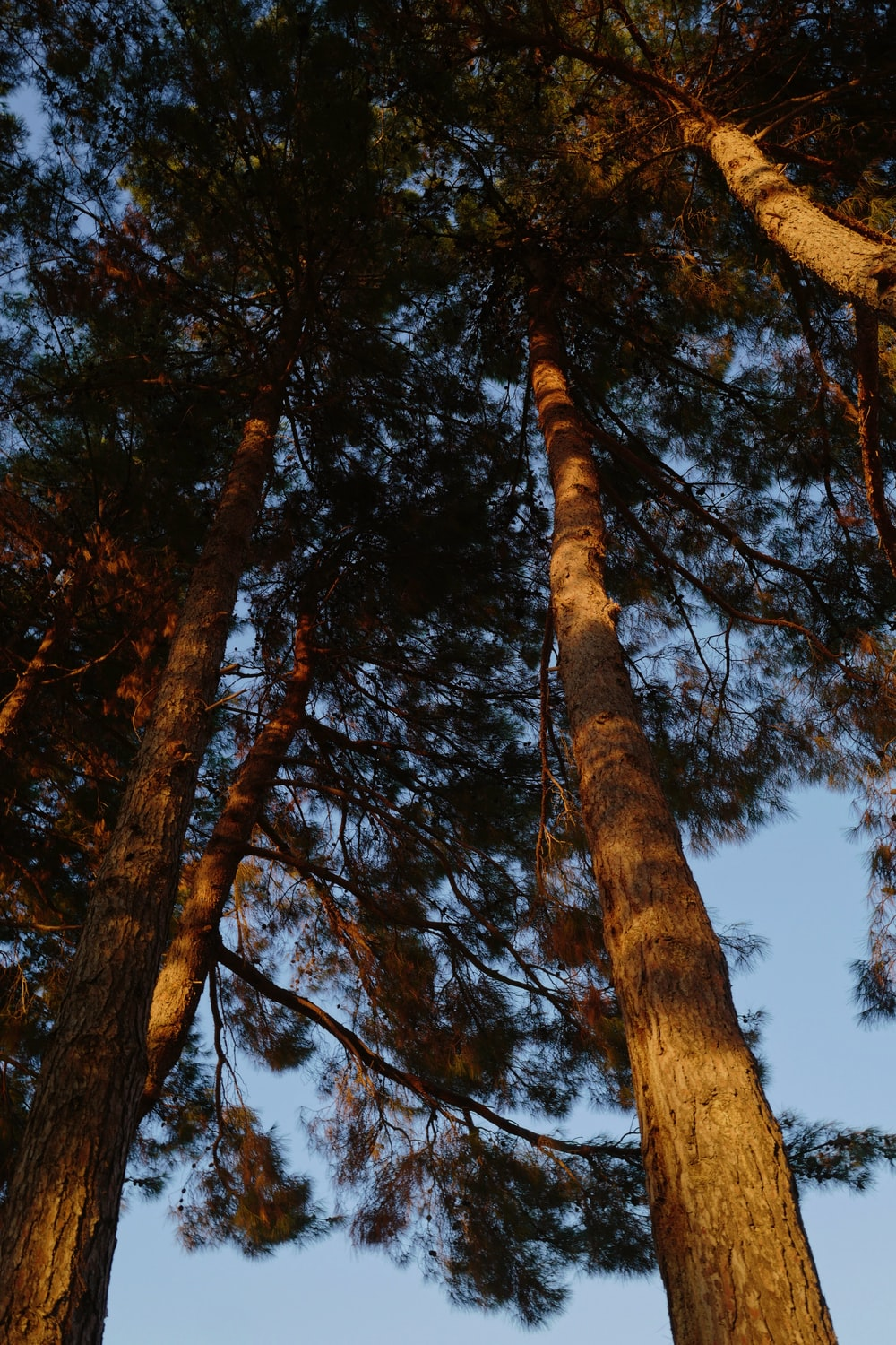 low angle photography of brown trees under blue sky during daytime